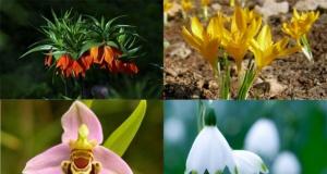 Bu bitkileri koparmanın cezası ağır