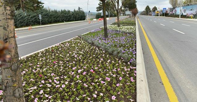 Ankara 24 milyon çiçekle renklenecek