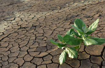 Tehlike büyüyor: Tam 571 bitki türü...