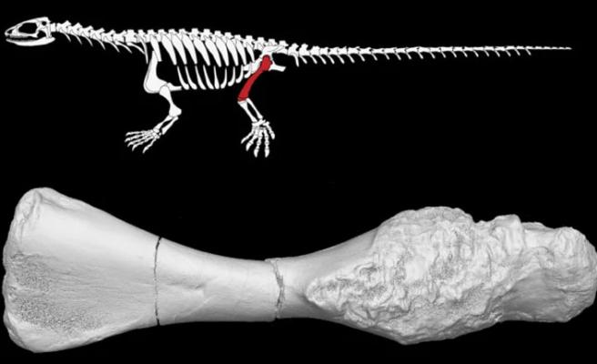 İlk kanser, dinozorların yaşadığı dönemde görülmüş!