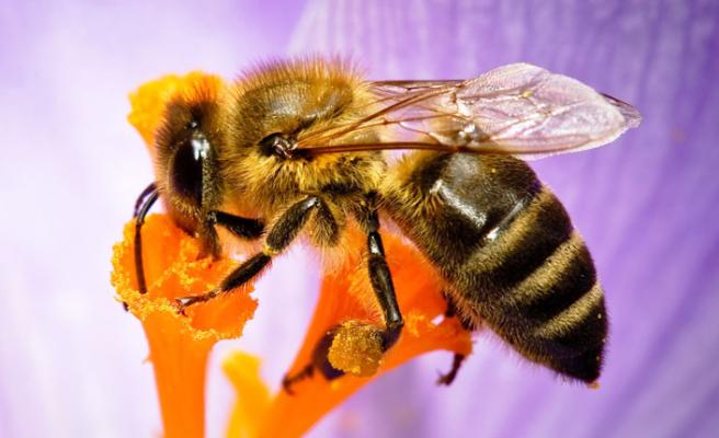 İnsan hayatı arılara mı bağlı?
