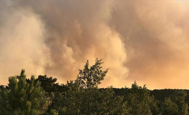 Eskişehir'de orman yangını!