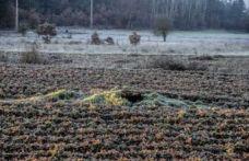 Çiftçiler için 'zirai don' uyarısı