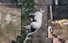Ankara'da zehirlenen 3 köpek öldü
