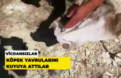 Vicdansızlar köpek yavrularını kuyuya attılar