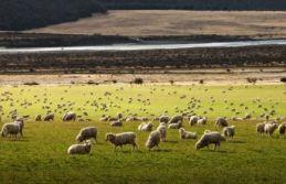 Çobanlar saldırdı: 35 çiftçi öldü