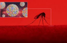 """4 kişide """"Batı Nil Virüsü"""" tespit edildi!"""