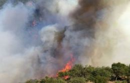 İzmir'de 500 hektar kül oldu