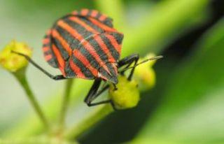 Böcek türlerinin soyu tükeniyor mu?