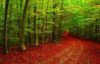 Türkiye ağaçlandırmada dünya üçüncüsü oldu