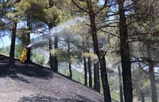 Adana'da korkutan orman yangını