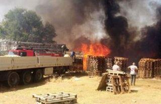 Zeytinlik alanda korkutan yangın! Fabrikaya sıçradı