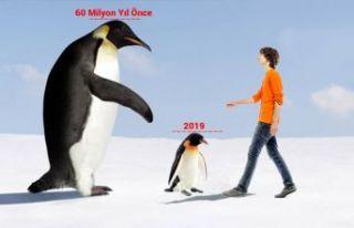 İnsan boyunda penguen fosili bulundu
