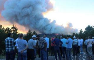 Kütahya'da orman yangını!