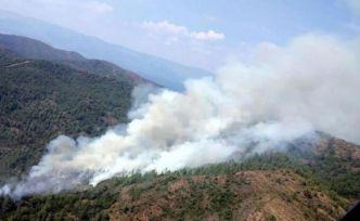 Tatil cennetinde korkutan orman yangını!
