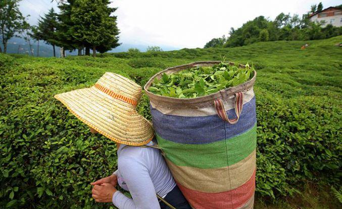 Çay taban fiyatları netleşti