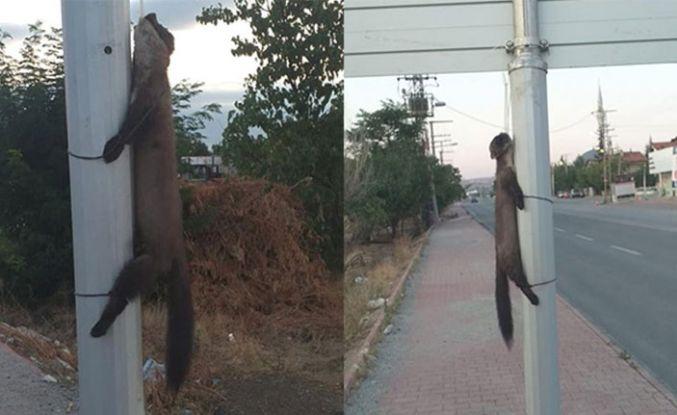 Konya'da vahşet! Boynundan bağlayıp astılar