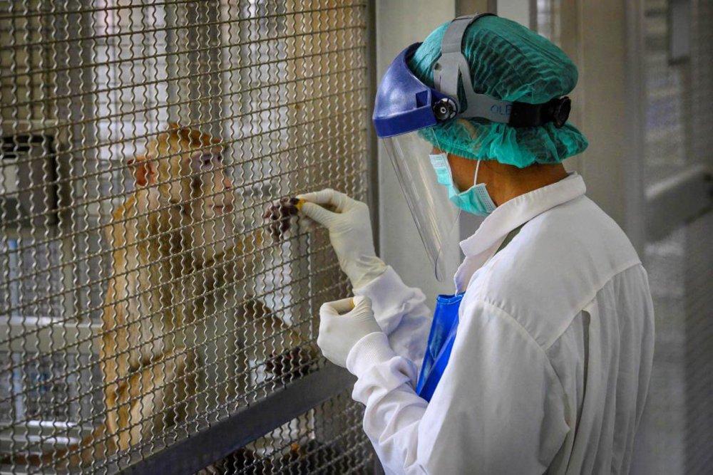 tayland maymun covid-19 aşısı