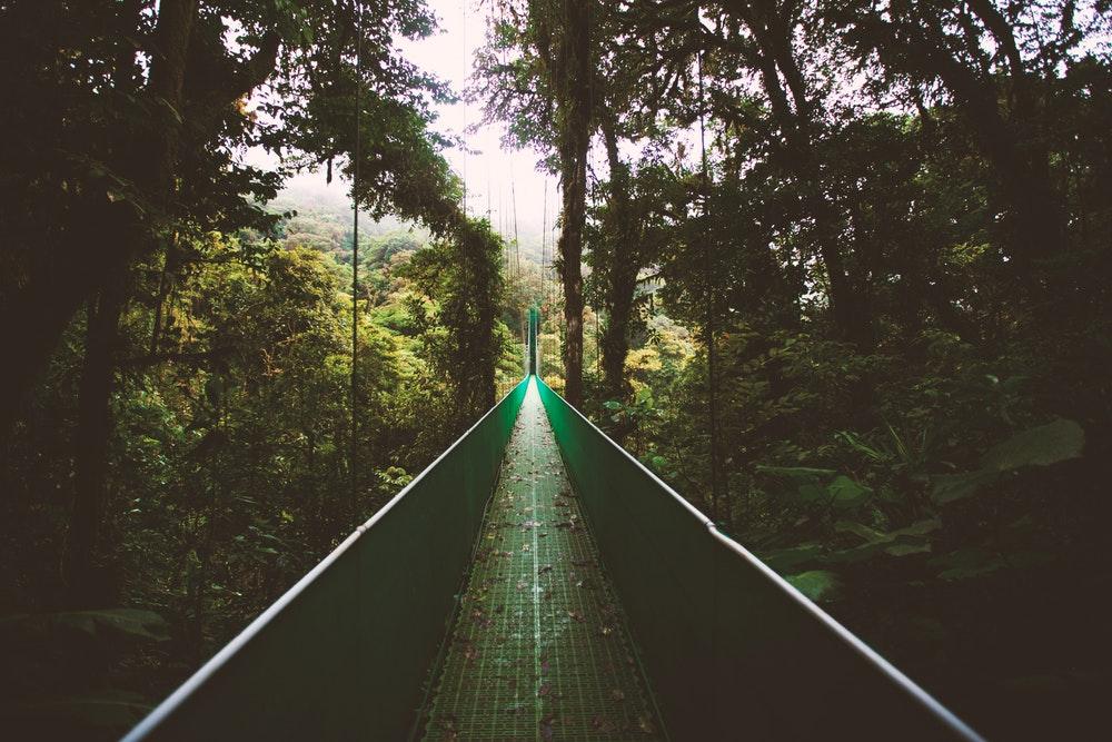 Monteverde Bulut Ormanları, Kosta Rika
